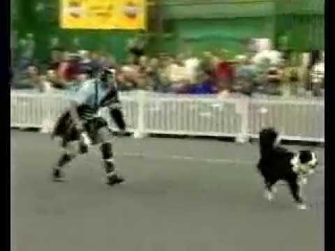 Dancing Dog – Attila & Fly – Gladiator