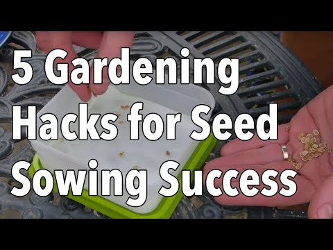 5 Gardening Hacks for Seed Sowing Success