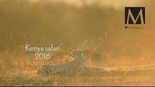 Kenya Safari - 2016