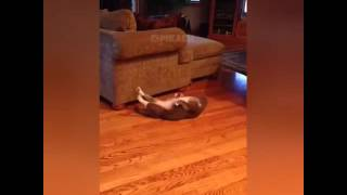 Кот занимается спортом