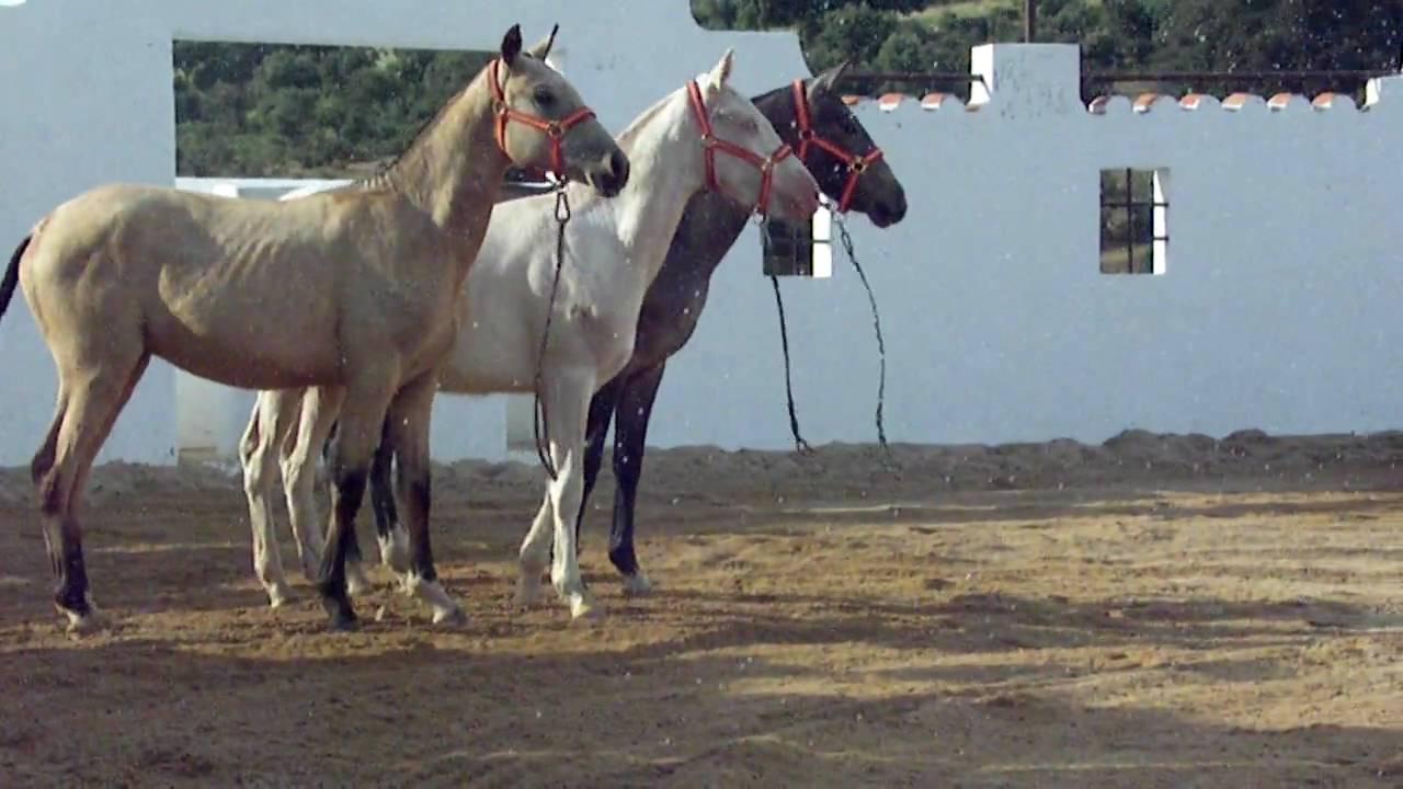 En Coche Colgante de Cabeza de caballo encanto colgante /& De Madera Cuentas Pony Jinete Jockey Regalo