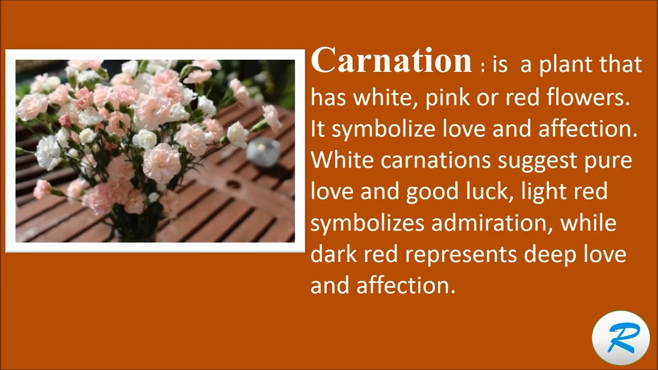 How to pronounce carnation white pink red carnation flower meaning how to pronounce carnation white pink red carnation flower meaning carnation definition mightylinksfo
