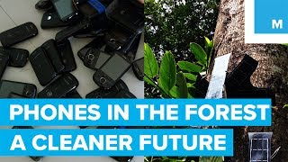 Using Cell Phones to Save the Rain Forest - A Cleaner Future