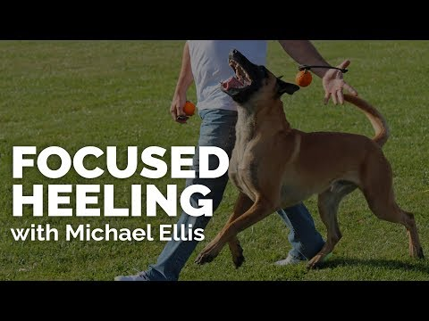 Focused Heeling With Michael Ellis I Trailer