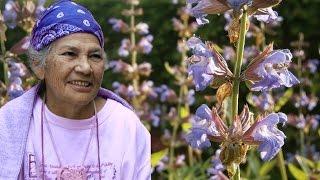 Efigenia Barrientos: Heilkraft der Pflanzen – ein schamanisches Pflanzenlexikon