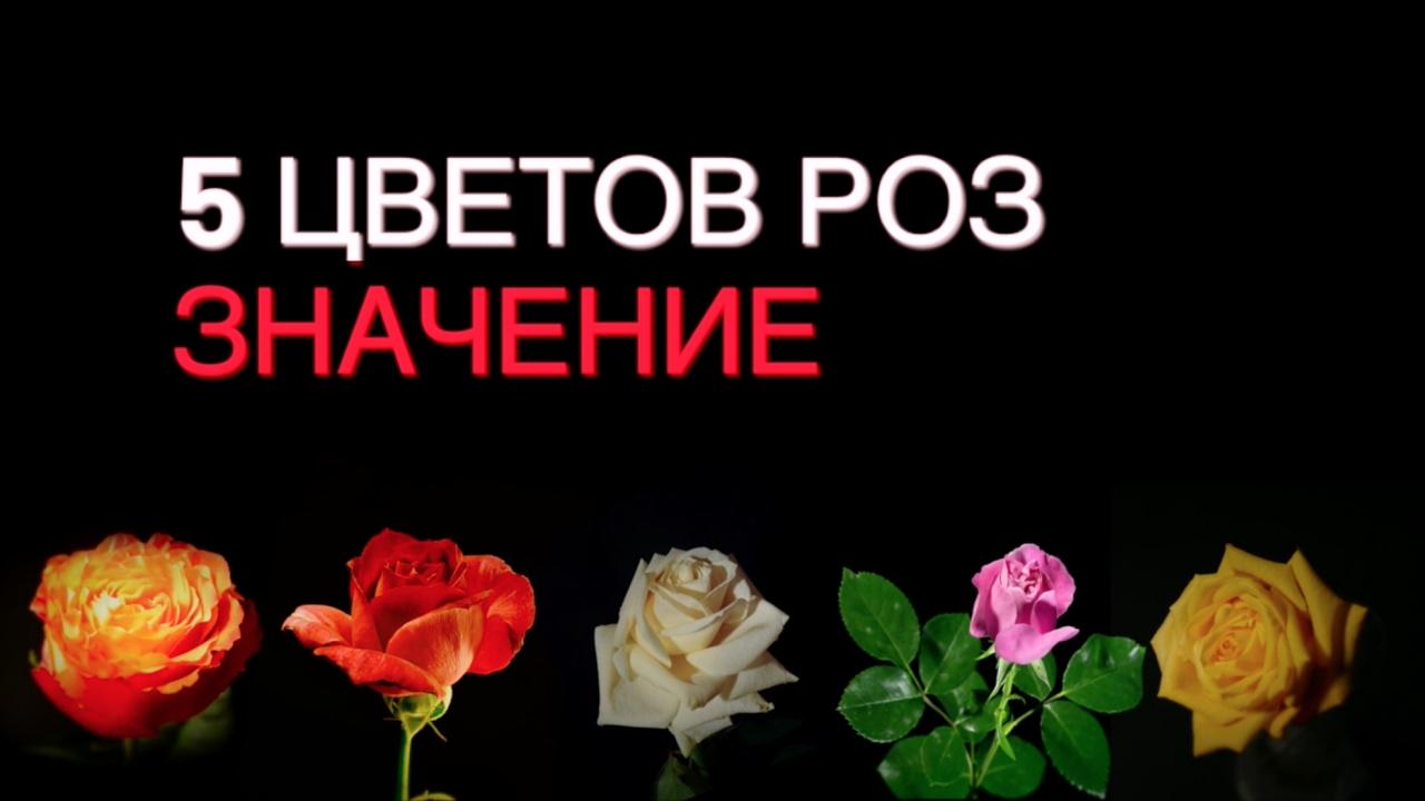 объёма значения цвета роз в подарок Великой Отечественной войны