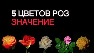 Скачать Значение цвета РОЗЫ какую розу выбрать