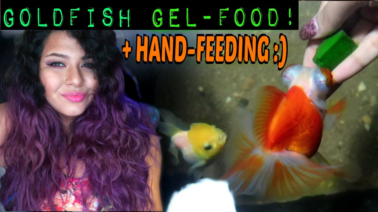 how to: DIY GOLDFISH GEL FOOD (GREAT FOR HAND FEEDING + VERY NUTRITIOUS)