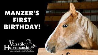 🔴 MANZER'S FIRST BIRTHDAY! (live-stream) // Versatile Horsemanship