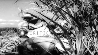 us president eisenhower announces the cut down in cuba s american sugar quota by hd stock footage