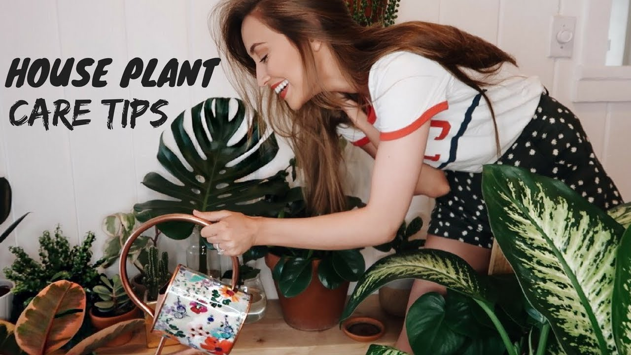 MY HOUSEPLANT COLLECTION (how to not kill your plants) on
