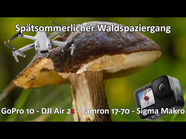 Spätsommerlicher Spaziergang durch den Wald - Unterwegs in der Dübener Heide - GoPro 10 - Air 2s
