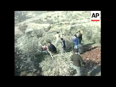 Palestinian farmers say Israeli settlers have destroyed olive groves