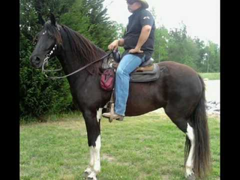 Liberty Big Stout Built Gaited Trail Horse For Sale Wmv