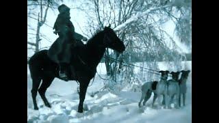 Russian Hunting. Dog vs Wolf. Borzoi Russian Wolfhound. 1910 Documentary.