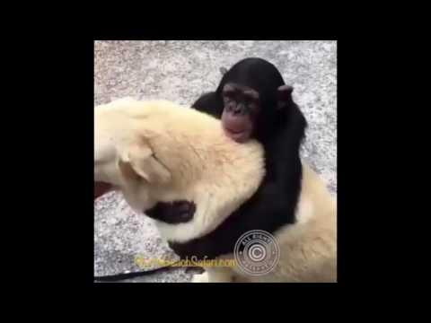 Monkey Meets Dog