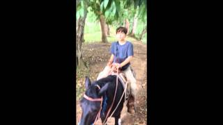 Hannah's Stable, Marin family ride, Belize