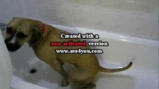 It's potty time (My dog pees in the shower or tub.) Cute, Funny video