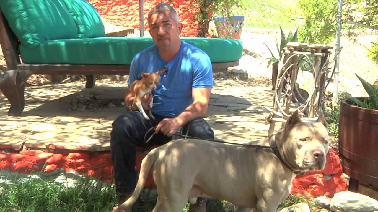 Cesar Saves A Pit Bull Named Sonic Youtube