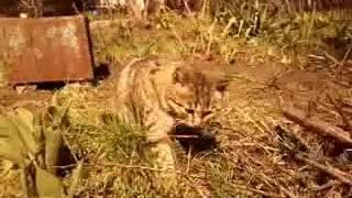 Почему кошки едят траву? Полезно ли это?(Инфо-видео)