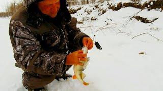 КОГДА ОКУНИ ГОРБАЧИ ТОЛЬКО ЗАТРАВКА Хищник на балансир и жерлицы Зимняя рыбалка