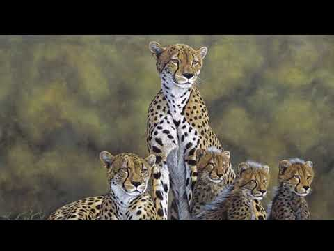 Wildlife Paintings hosted by Maverick Art of Africa