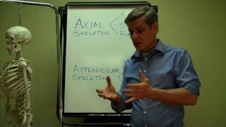 Axial + Appendicular Skeleton Part II