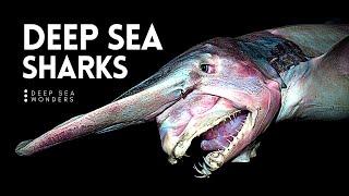 Why Sharks get Creepier the Deeper you Go