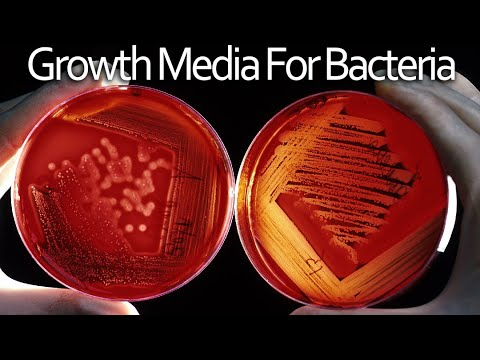Growth Media And Pouring Plates - Microbiology Techniques
