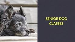 Senior Dog Classes