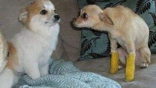 Komik Kıskanç Köpekler Derleme - Sevimli Köpekler Kıskançlık Hissediyorum