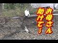 崖から落ちた子猫のもとへ、母猫の救出劇!【親子の絆】
