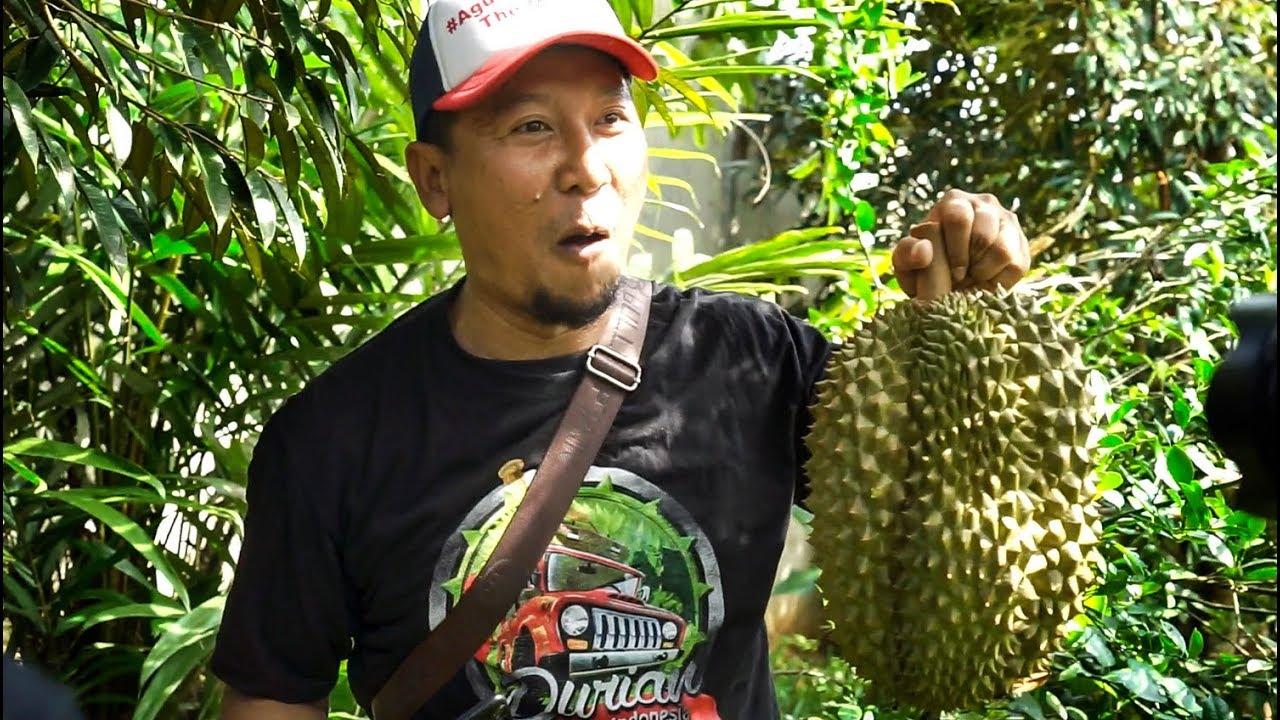 Kebun Durian Bawor Haji Lis Jasinga