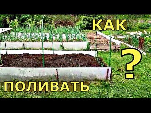 КОГДА поливать растения в ОТКРЫТОМ ГРУНТЕ?