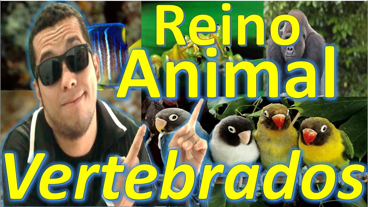 Biologia reino animal