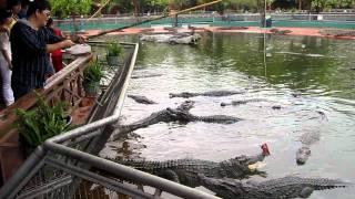 Vietnam Trip - Crocodile Feeding Part 2