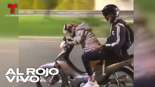 Buscan al dueño del perro que se viralizó por conducir una motocicleta en Colombia