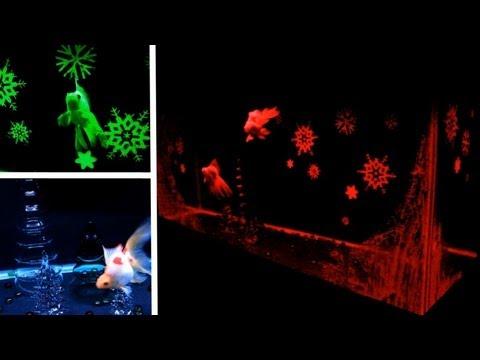 ❄ Christmas Lights Fish Tank ❄
