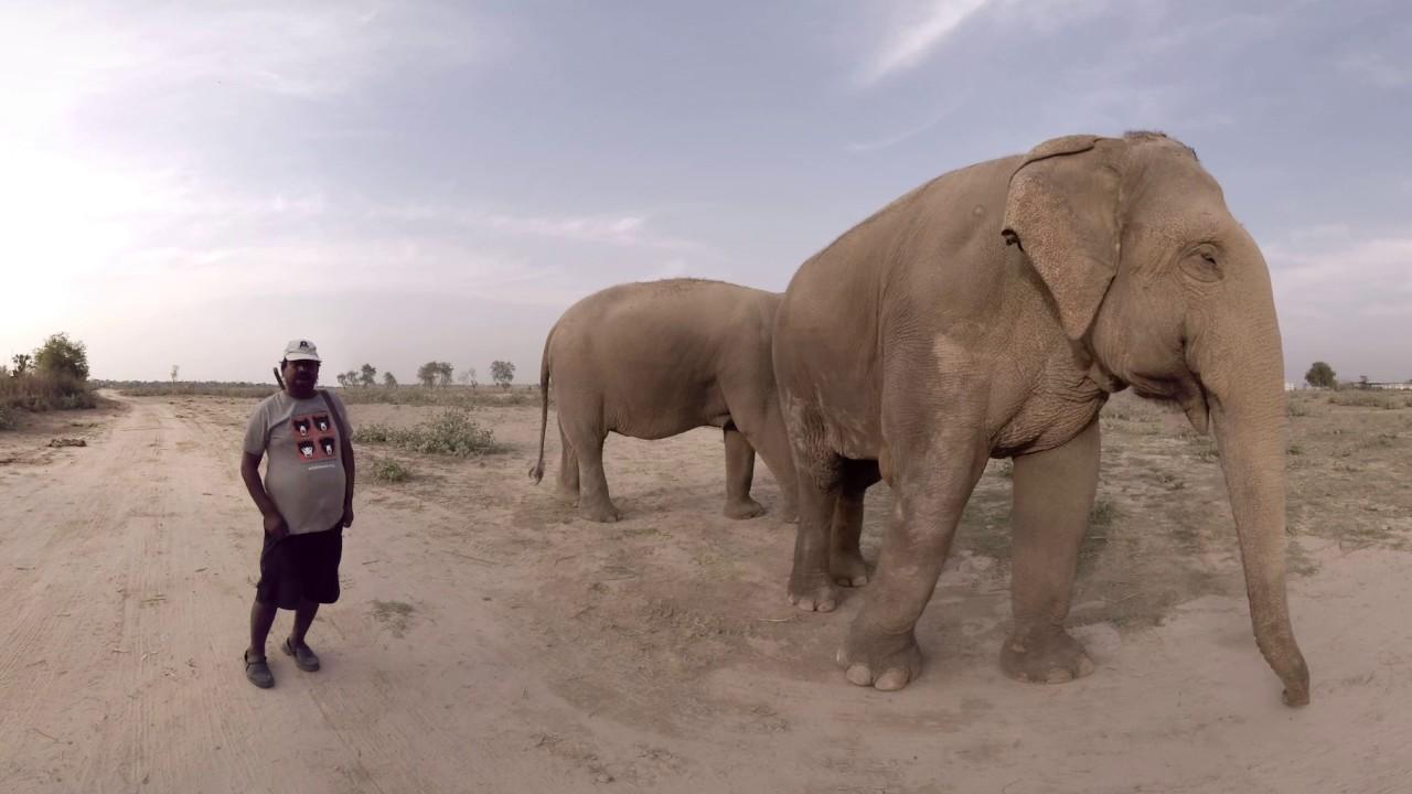 360 video: Wildlife SOS - Elephant Conservation, Agra, India