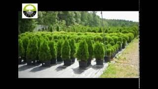 Питомник растений «Вергер»(Если вы решили заняться ландшафтным дизайном на своем приусадебном участке или высадить по соседству с..., 2016-07-15T12:28:14.000Z)