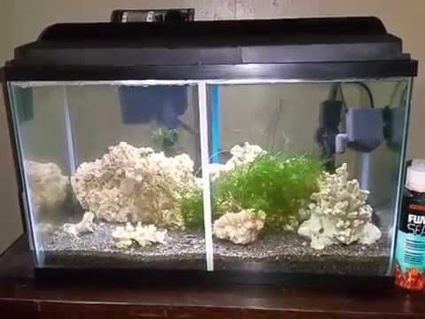 Basic difference between saltwater and freshwater fish for Acrylic vs glass fish tank