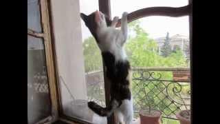 Самая красивая кошка. У этой кошки необыкновенный узор. Уж очень красивая кошка