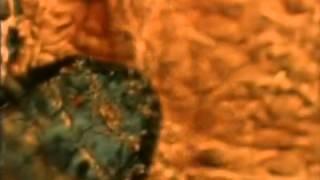 hairmites