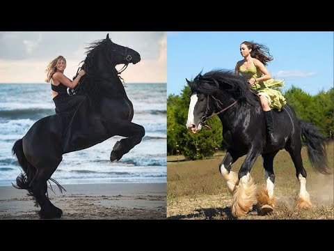 Horse SOO Cute! Cute And funny horse Videos Compilation cute moment #7