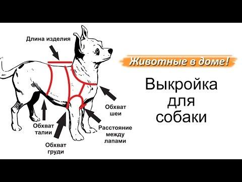 видео: Выкройка для собаки.