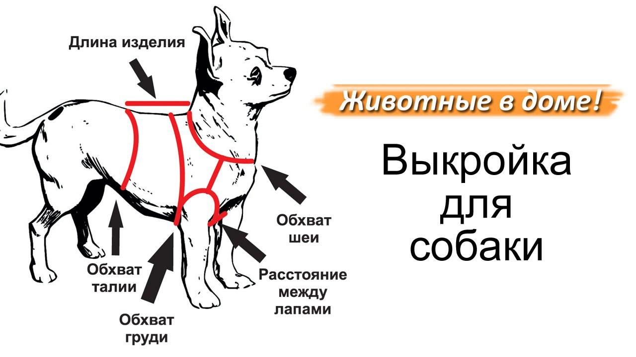 Пошаговые выкройки для собакам