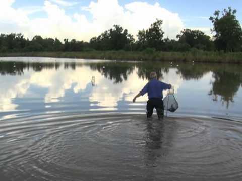 Crawfish và ngành thủy sản Louisiana (VOA)