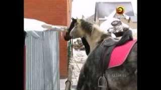 В Татарстане решили возродить некогда популярную породу лошадей