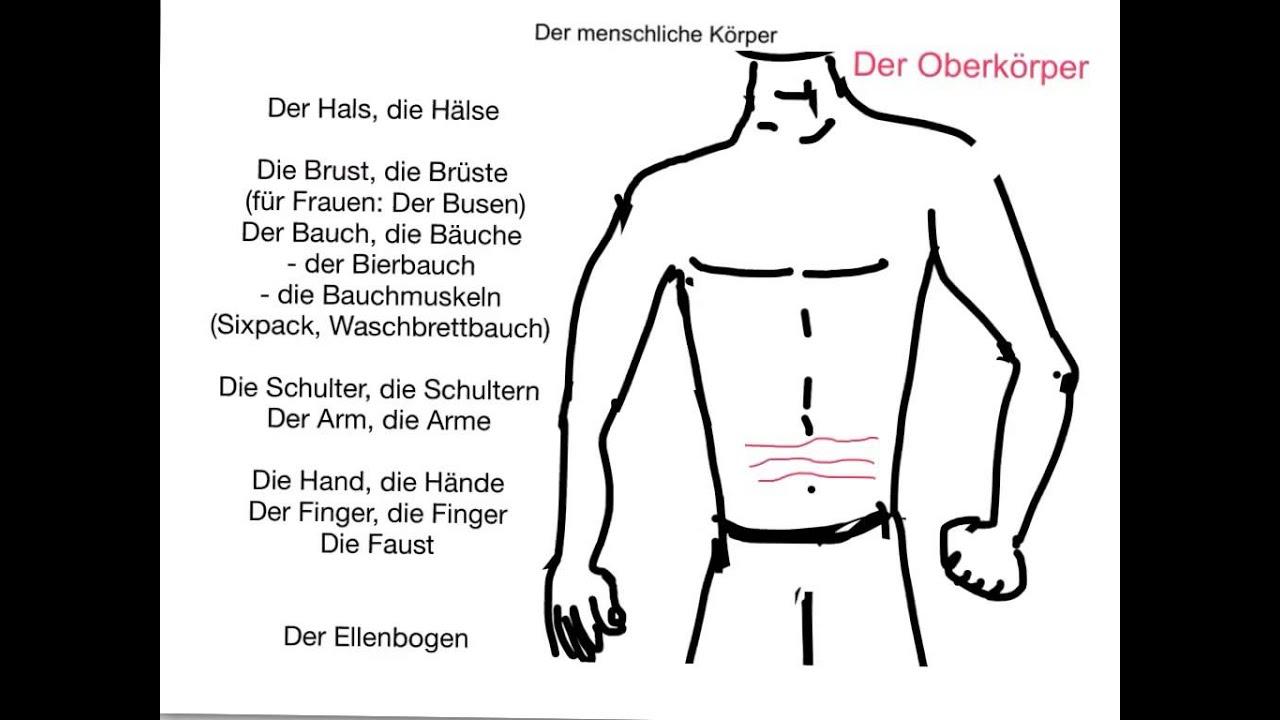 German Body Parts Diagram Block And Schematic Diagrams