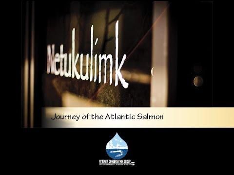 MCG Journey of the Atlantic Salmon